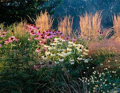 Autumn border with calamagrostis 'karl foerster' , echinacea purpurea and echinacea purpurea 'white swan'. Designer john massey