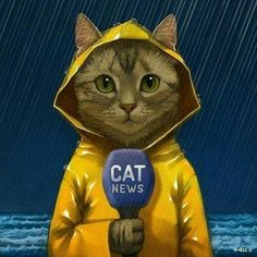Tom Cat reporting live about. Indonesia ahahha - - Profil - Katzen World I Love Cats, Crazy Cats, Cool Cats, Cute Kittens, Cats And Kittens, Photo Chat, Here Kitty Kitty, Cat Drawing, Cat Art