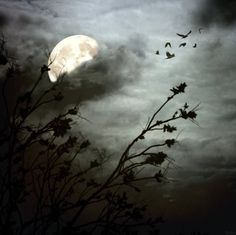 Full moon in the clouds Samhain, Robert Frank, Shoot The Moon, Moon Pictures, Moon Rise, Beautiful Moon, Stars And Moon, Full Moon, Night Skies