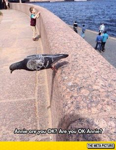 Funny pictures about Defying Gravity Pigeon. Oh, and cool pics about Defying Gravity Pigeon. Also, Defying Gravity Pigeon photos. Cute Funny Animals, Funny Cute, The Funny, Best Funny Pictures, Funny Photos, Pigeon Funny, Pigeon Meme, Naruto Funny, Animal Memes