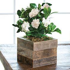 house plants near me Big Indoor Plants, Big Plants, Exotic Plants, Growing Flowers, Planting Flowers, Plants Near Me, Plants Grown In Water, Tropical House Plants, Flower Pot Design