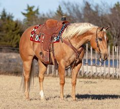 American Quarter Horse, Horse Tack, Beautiful Horses, Animals, Pretty Horses, Animales, Animaux, Animal, Animais