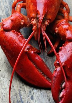 $200 to Spend on Fresh Lobster and Seafood from Maine