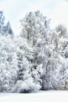 Birches -