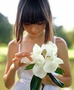 magnolia - the dream