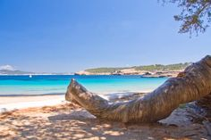 Cala Bassa  ✈✈✈ Here is your chance to win a Free International Roundtrip Ticket to Ibiza, Spain from anywhere in the world **GIVEAWAY** ✈✈✈ https://thedecisionmoment.com/free-roundtrip-tickets-to-europe-spain-ibiza/
