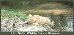 Lion Safari Wildlife Park at silvassa http://www.silvassa.co.in/