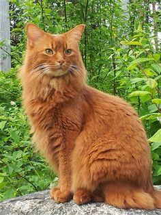 Karina Tegelids katt Rozzo på sin favoritsten