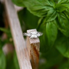 """@cassidymister  #cassidyMRphotography """"A little sparkle for your timeline ✨ Melissa's engagement ring was custom made! I haven't seen a rope band before and absolutely adored this style. I…"""""""