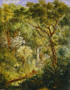 Brazilian Jungle - Johann Moritz Rugendas