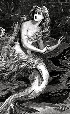 """Cropped close-up of the mermaid in the """"Mermaid Compared with the Manatee at the Zoological Gardens London"""" Mermaid Song, Mermaid Board, Mermaid Fairy, Real Mermaids, Mermaids And Mermen, Mythical Creatures, Sea Creatures, Mermaid Artwork, Sphinx"""