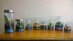 My little terrariums - succulents