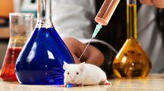 El ácido ascórbico puede matar las células cancerosas y detener el crecimiento de tumores cancerosos, según lo comprobó un grupo de investigadores.
