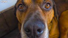 BUMPER IS ZIEK! - ENZOKNOL VLOG #1256 Dogs, Youtube, Animals, Animales, Animaux, Doggies, Animais, Dog, Youtubers