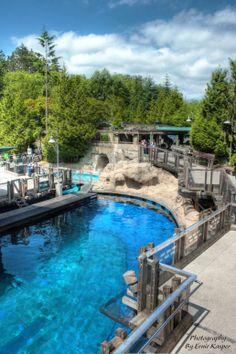 by Ernie Kasper Vancouver Aquarium, Stanley Park, Zoos, Aquariums, British Columbia, Public, Canada, Outdoor Decor, Photography
