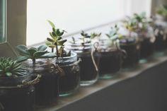succulents in baby food jars via needles + leaves