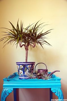 Dracaena is a popular houseplant known for its ornamental value. Apart from that, there are 6 Great Dracaena Plant Benefits proven in scientific studies! Dracaena Plant, Madagascar Dragon Tree, Easy Care Plants, Floor Plants, House Plant Care, Succulent Care, Interior Plants, Bougainvillea, Gardens