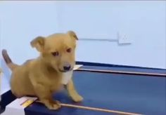 Cute Funny Animals, Cute Baby Animals, Funny Dogs, Animals And Pets, Cute Puppies, Cute Dogs, Dogs And Puppies, Cute Animal Videos, Funny Animal Pictures