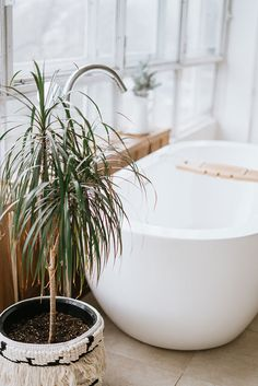 The Best Houseplants to Put in Your Bathroom! Decorate a small bathroom with Fiddle leaf fig air plants aloe vera pothos philodendron ferns learn the benefits of keeping plants in the shower. Source by Bathroom Plants, Small Bathroom, Bathroom Showers, Bathroom Layout, Bathroom Designs, Bathroom Interior, Faux Plants, Indoor Plants, Shower Plant