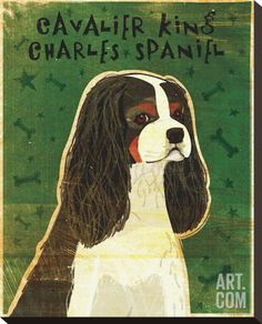 Cavalier King Charles (tri-color) Stretched Canvas Print by John Golden at Art.co.uk