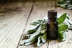 Sage Herb: History, Nutrition Facts, Health Benefits, Side Effects, and Fun Facts Sage Essential Oil, Natural Essential Oils, Sage Herb, Pomegranate Oil, Best Hair Oil, Carrot Seed Oil, Brown Bottles, Natural Vitamin E, Hair Shedding