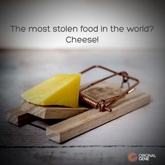 🧀 Did you know that around of ALL the cheese made in the world gets stolen? There's even a black market of stolen cheeses. And that's without taking into account all the mice crimes. Dna Facts, How To Make Cheese, Interesting Facts, Mice, Make It Yourself, The Originals, Black, Food, Computer Mouse