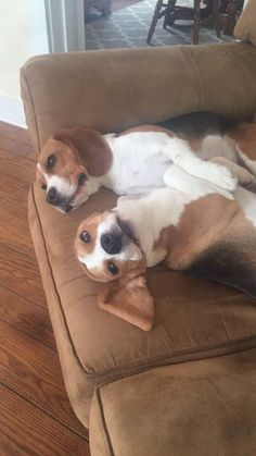 The beagle bros. Forever grumpy. http://ift.tt/2swFJZw