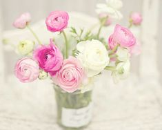 Flower Photography - Pink & White Ranunculus Flowers - French - 8x10 Fine Art Photography Print - Pink White Home Decor