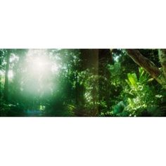 Sunbeams shining through trees in a forest Parque Lage Jardim Botanico Corcovado Rio de Janeiro Brazil Canvas Art - Panoramic Images (15 x 6)