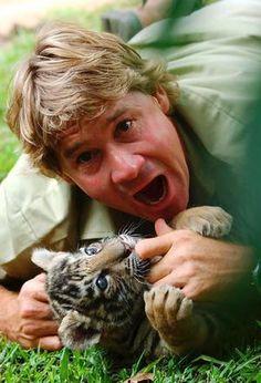 A cute photo of Steve Irwin and a baby tiger Steve Irwin, Terri Irwin, Irwin Family, Baby Animals, Cute Animals, Crocodile Hunter, Bindi Irwin, Cute Photos, My Idol