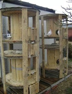 Cable spool chicken coops