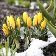 Ani mi się śni: I LOVE SPRING TAG, czyli dlaczego kocham wiosnę ?