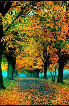 ПРИРОДА # КРАСОТА осень