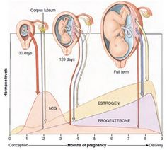 During pregnancy, women notice many changes in their body. These changes and symptoms are caused by the increased production of hormones during pregnancy. There are progesterone, estrogen, and of course, the pregnancy hormones, called HCG or human ch