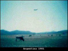 Alien cow abduction Argentina 1981  Rapto de vaca por OVNI 1981 https://www.facebook.com/photo.php?fbid=769435163096588&set=a.169889379717839.34015.100000903334624&type=1 http://i.imagefra.me/cf8jss2y
