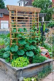 Vertical Vegetable Gardening (from vegetable-gardening-with-lorraine.com)