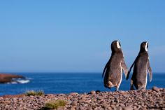 Puerto Madryn visit Penninsula Valdes a wildlife reserve of South America home to sea lions, sea elephants, seals, Magellanic penquins