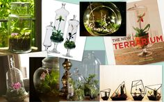 Terrariums terrariums!