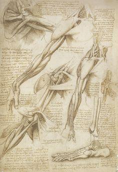Leonardo da Vinci  Mechanics of Man