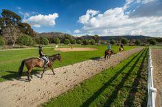 Take a walk, jog, bike, or horseback ride on San Marcos' Twin Oaks Valley trail. #SDMNeighborhoods