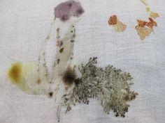 동백꽃,동백나무,튤립나무,기타 decayed camellia leaves, camellia flower,jupiter leaves,etc