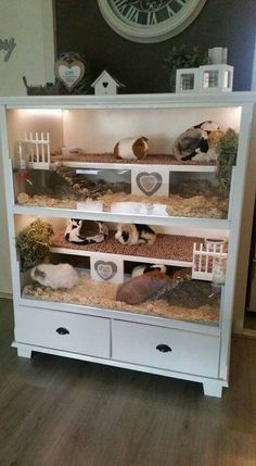 for guinea pigs but cute for hamsters or gerbi. -Not for guinea pigs but cute for hamsters or gerbi. Guinea Pig Hutch, Guinea Pig House, Pet Guinea Pigs, Guinea Pig Care, Pet Pigs, Indoor Guinea Pig Cage, Rabbit Hutch Indoor, Indoor Rabbit Cage, Rabbit Cages