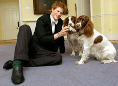 The Fascinating History of the British Royal Pups - The BarkPost