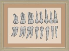 Teeth anatomy: cross-stitch pattern. $3.00, via Etsy.