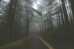Aesthetic #photography #fog #mist  #photographylife #forest #road