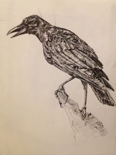 Sketchbook drawing of a crow, in pen.