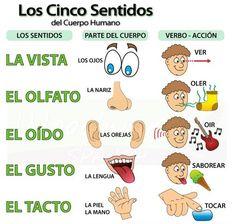 Los Cinco Sentidos – De Vijf Zintuigen la vista – het zicht -> (yo)veo – ik zie el olfato – de geur -> (yo)huelo – ik ruik el oído – het gehoor -> (yo)oigo – ik hoor el gusto – de smaak -> (yo)saboreo– ik proef el tacto – het gevoel -> (yo)toco – ik …