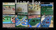 """The Home Teacher: """"Not a Box"""" Linky Party: Biome Box"""
