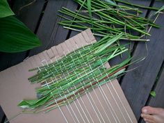 How to Weave a Privacy Screen from Sticks & Stalks