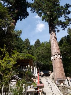 由岐神社--prayer papers attached to sacred trees at Shinto and Buddhist temples in Japan